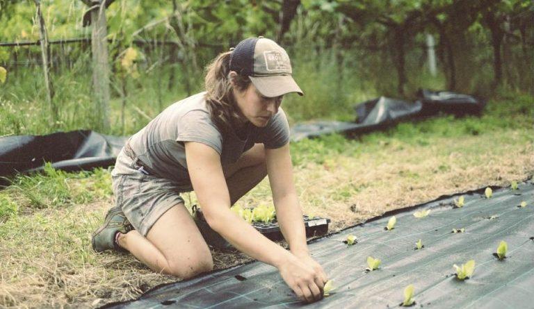 Agricoltura. 15 milioni per il bonus donne in campo 2020 alle imprenditrici agricole: i requisiti